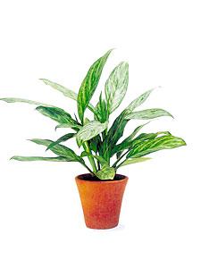 знакомство с растениями в доу